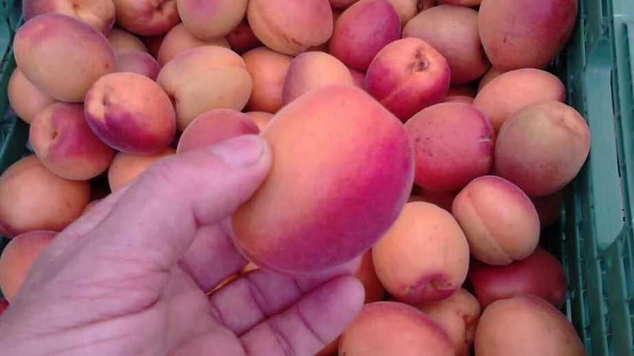 abricots du Valais mazot de vex liqueur et eau-de-vie artisanale abricots