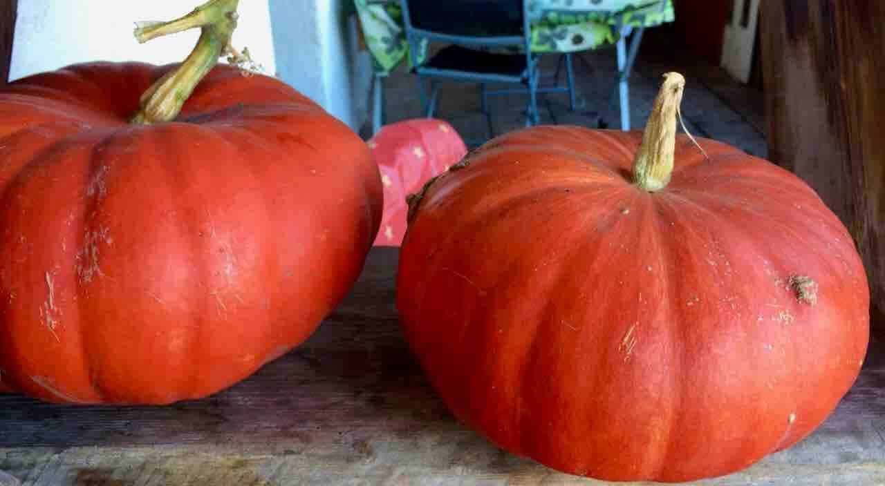 nos courges
