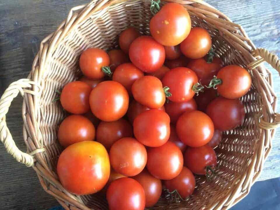 Mazot De Vex Tomate Matina Salade